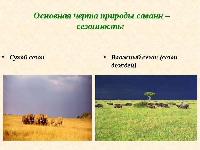 Основная черта природы саванн – сезонность: Сухой сезон Влажный сезон (сезон...