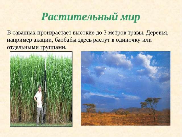 Растительный мир В саваннах произрастает высокие до 3 метров травы. Деревья,...