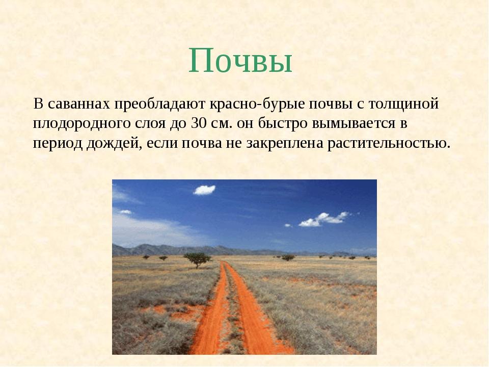 Почвы В саваннах преобладают красно-бурые почвы с толщиной плодородного слоя...