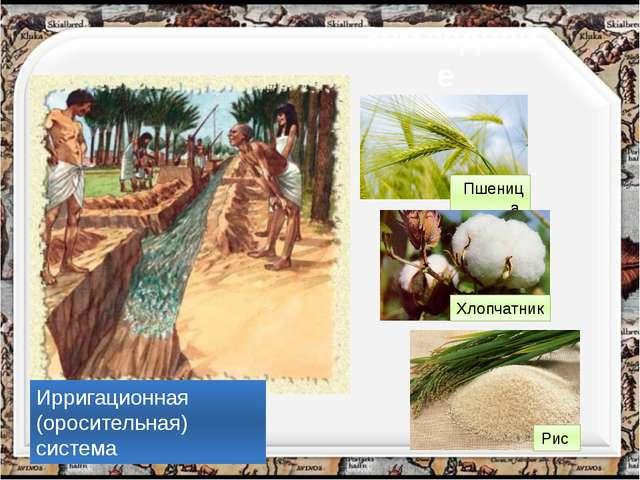 Земледелие Ирригационная (оросительная) система Пшеница Хлопчатник Рис