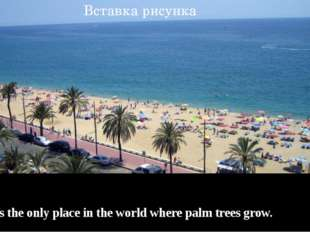 Spain is the only place in the world where palm trees grow.
