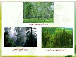 Деревья леса лиственный лес хвойный лес смешанный лес