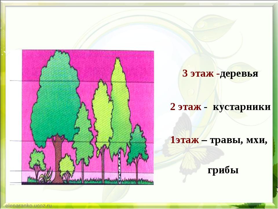 3 этаж -деревья 2 этаж - кустарники 1этаж – травы, мхи, грибы