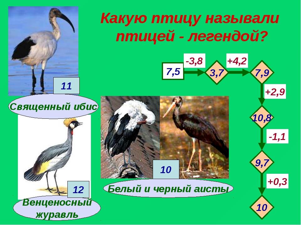 Какую птицу называли птицей - легендой? Венценосный журавль 7,5 -3,8 +4,2 -1,...