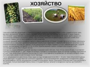 ХОЗЯЙСТВО Сельское хозяйство продолжает оставаться основной отраслью экономик