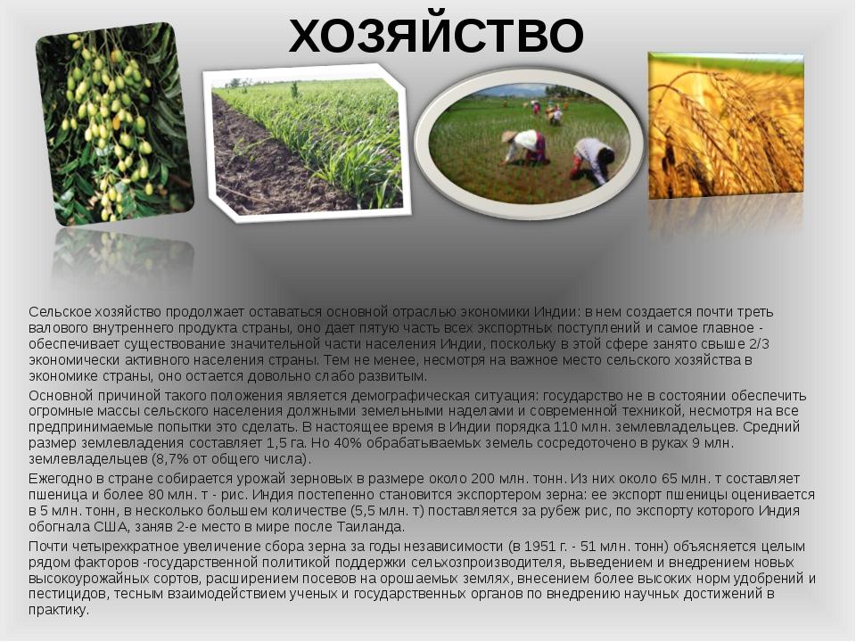 ХОЗЯЙСТВО Сельское хозяйство продолжает оставаться основной отраслью экономик...