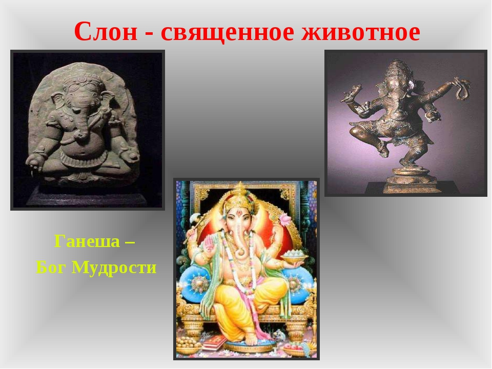 Слон - священное животное Ганеша – Бог Мудрости