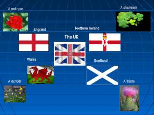 England Scotland Northern Ireland Wales The UK A red rose A thistle A daffodi