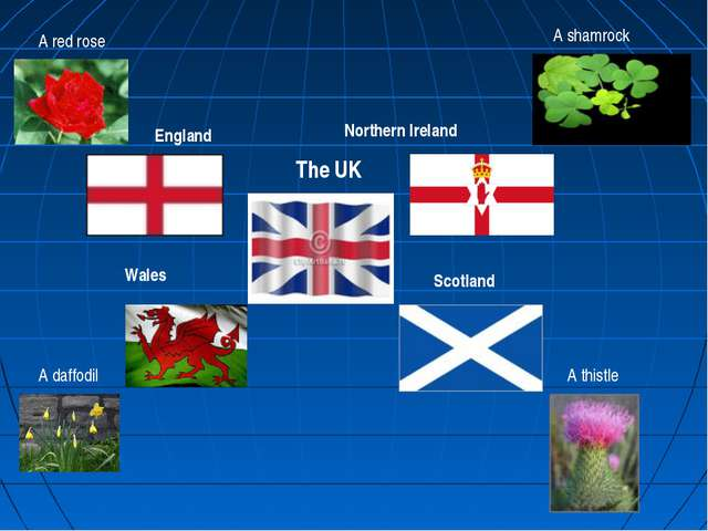 England Scotland Northern Ireland Wales The UK A red rose A thistle A daffodi...
