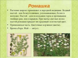 Ромашка Растение широко применяют в народной медицине. Водный настой - как бо