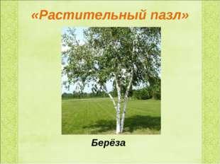 «Растительный пазл» Берёза