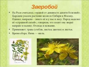 Зверобой На Руси считалось «травой от девяносто девяти болезней». Царским ука