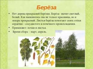 Берёза Нет дерева прекрасней берёзки. Берёза- значит светлый, белый. Как выяс