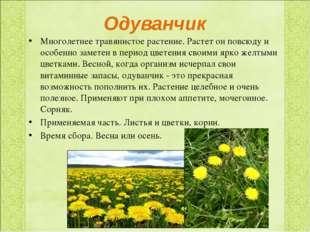 Одуванчик Многолетнее травянистое растение. Растет он повсюду и особенно заме