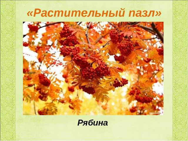«Растительный пазл» Рябина