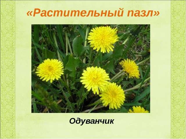 «Растительный пазл» Одуванчик