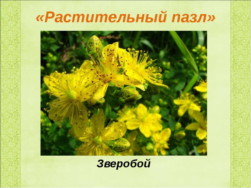 «Растительный пазл» Зверобой