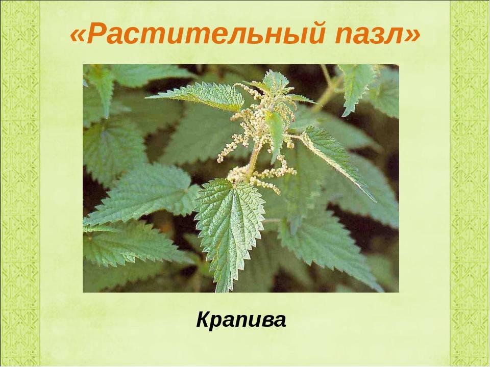 «Растительный пазл» Крапива