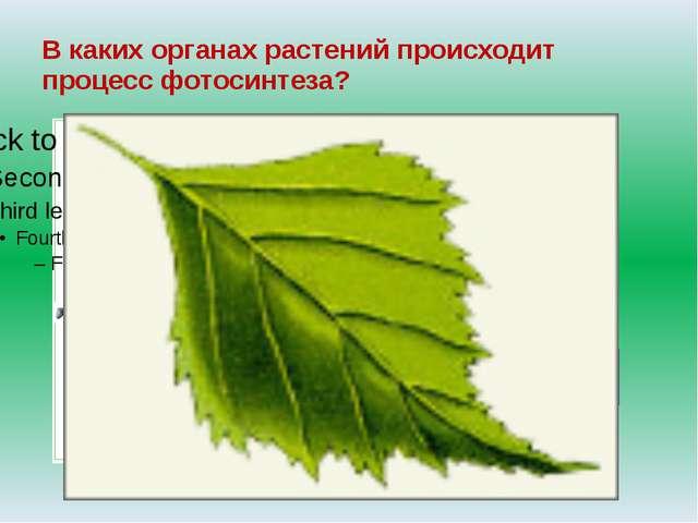 В каких органах растений происходит процесс фотосинтеза? цветок лист корень В...
