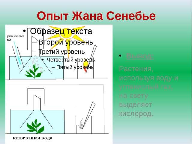 Опыт Жана Сенебье Вывод: Растения, используя воду и углекислый газ, на свету...