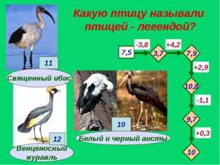 Какую птицу называли птицей - легендой? Венценосный журавль 7,5 -3,8 +4,2 -1,