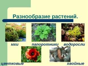 Разнообразие растений. мхи водоросли папоротники цветковые хвойные