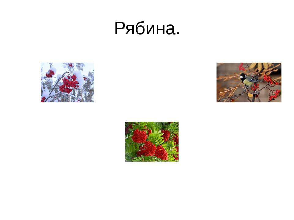 Рябина.
