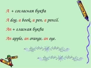 A + согласная буква A dog, a book, a pen, a pencil. An + гласная буква An app