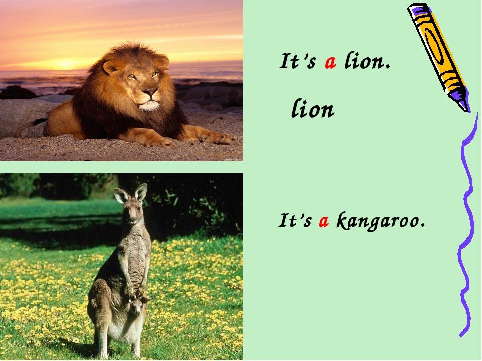 It's a lion. lion It's a kangaroo.