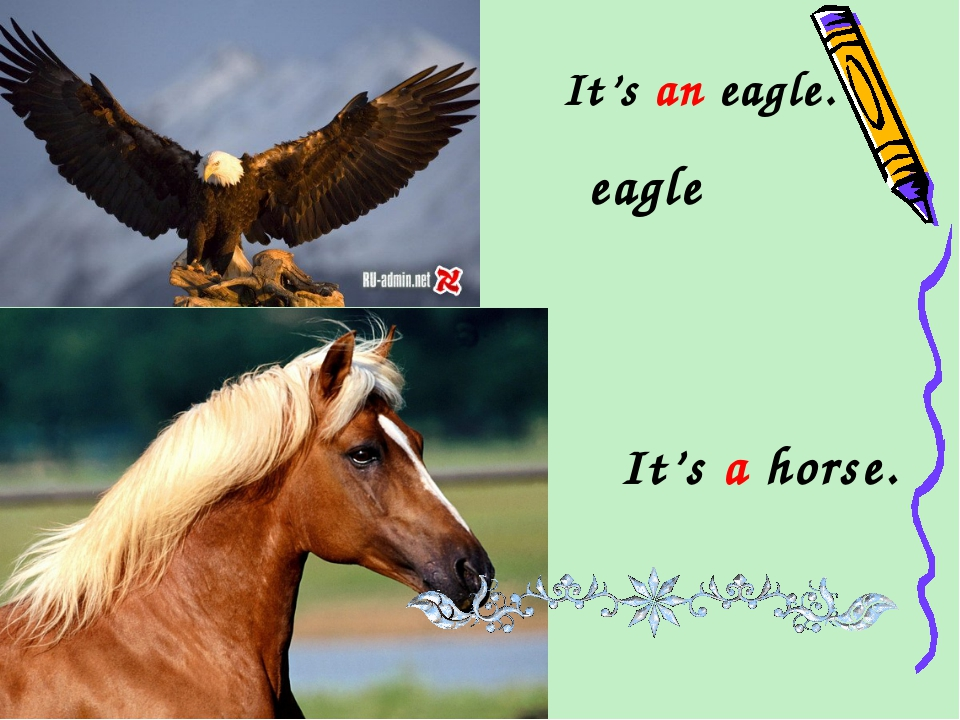It's an eagle. eagle It's a horse.