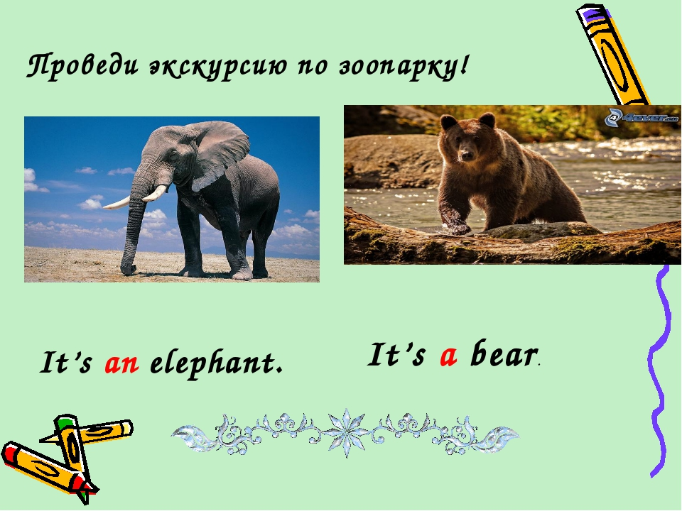 Проведи экскурсию по зоопарку! It's an elephant. It's a bear.