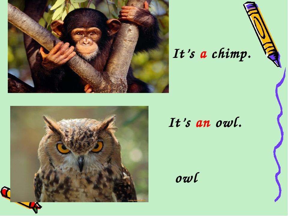 It's a chimp. It's an owl. owl