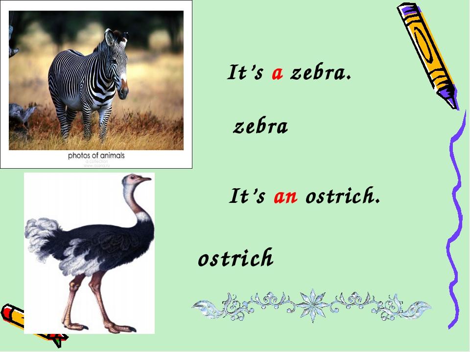 It's a zebra. zebra It's an ostrich. ostrich