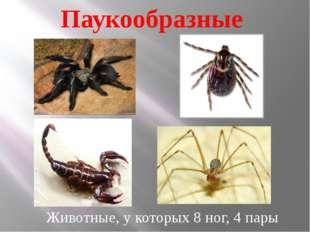 Паукообразные Животные, у которых 8 ног, 4 пары