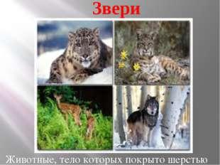 Звери Животные, тело которых покрыто шерстью