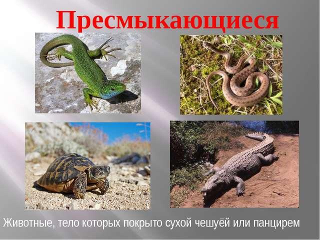 Пресмыкающиеся Животные, тело которых покрыто сухой чешуёй или панцирем