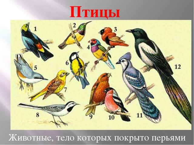 Птицы Животные, тело которых покрыто перьями