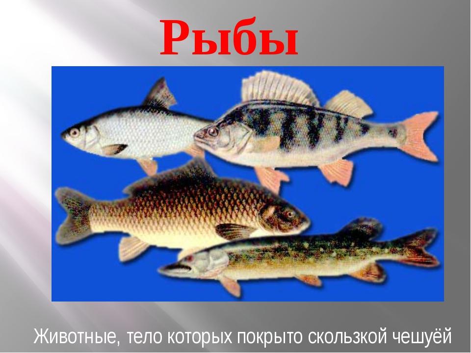 Рыбы Животные, тело которых покрыто скользкой чешуёй