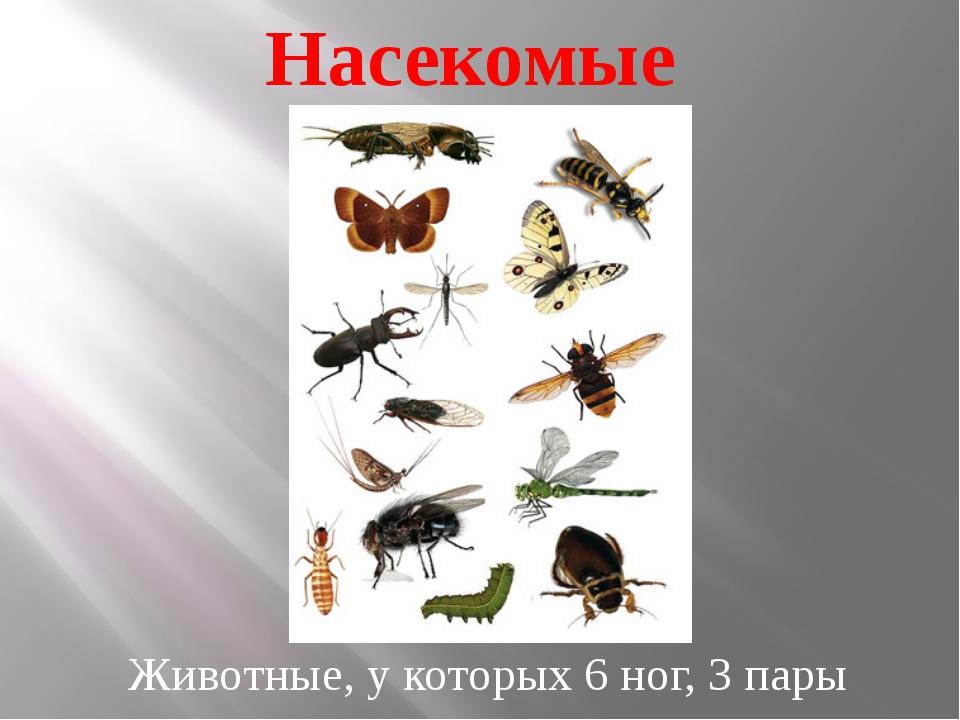 Насекомые Животные, у которых 6 ног, 3 пары