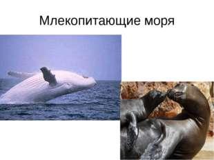 Млекопитающие моря
