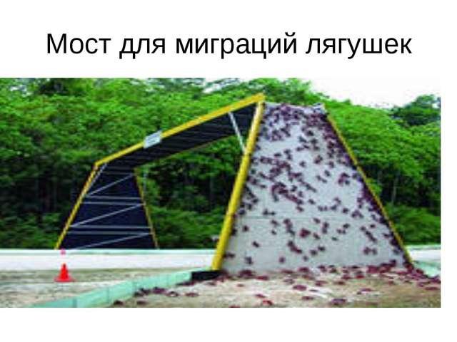 Мост для миграций лягушек