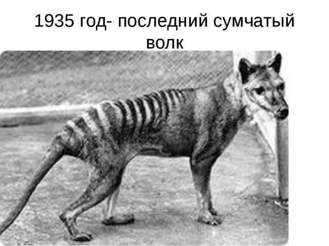1935 год- последний сумчатый волк