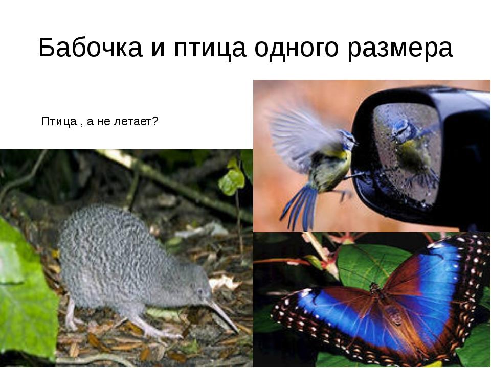 Бабочка и птица одного размера Птица , а не летает?