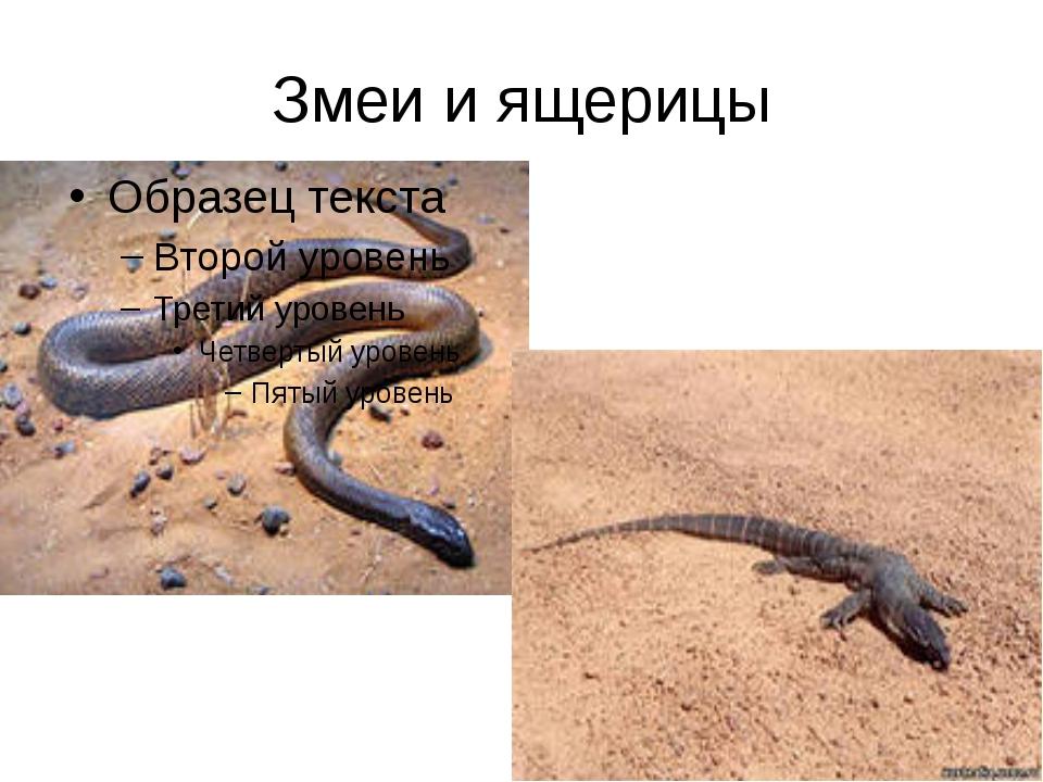 Змеи и ящерицы