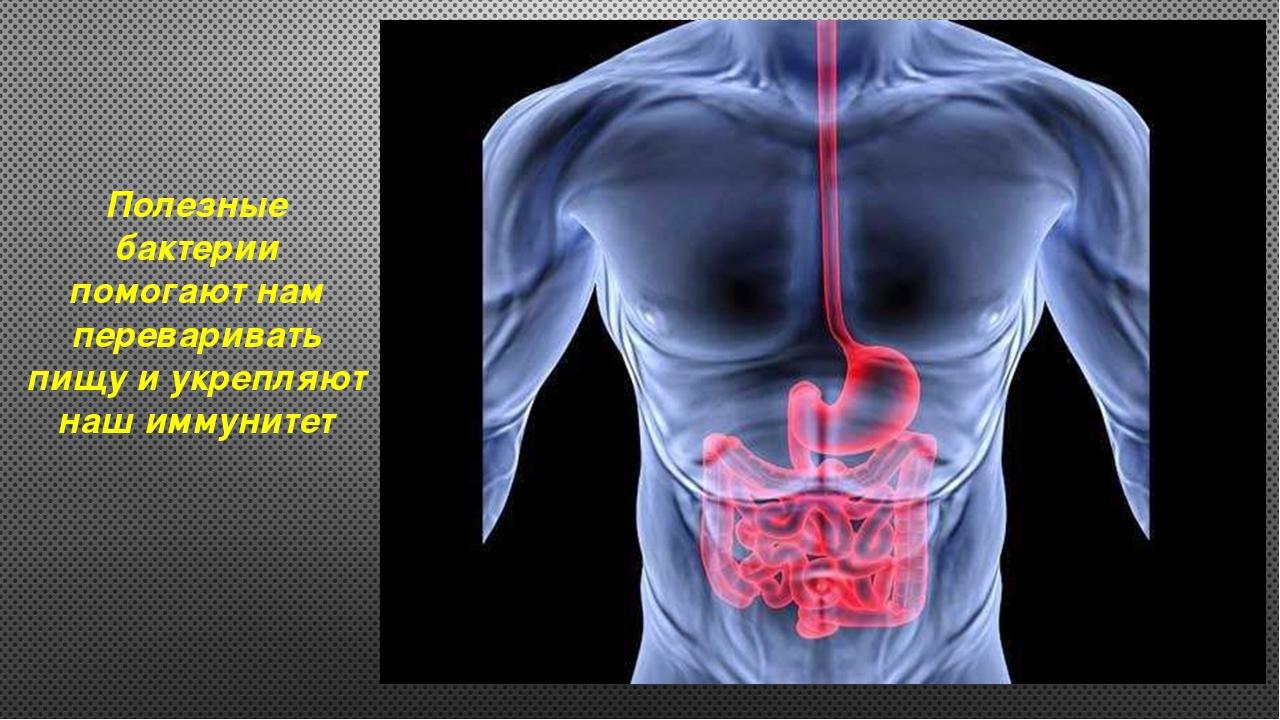 Полезные бактерии помогают нам переваривать пищу и укрепляют наш иммунитет
