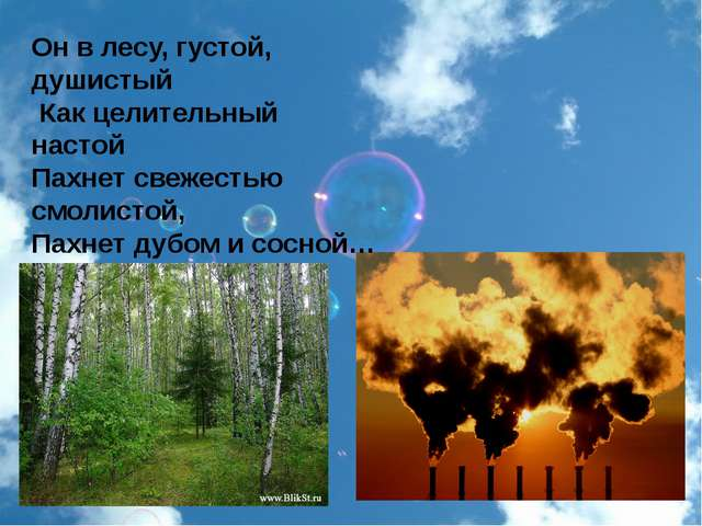 Он в лесу, густой, душистый Как целительный настой Пахнет свежестью смолисто...