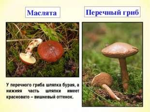 Маслята Перечный гриб У перечного гриба шляпка бурая, а нижняя часть шляпки и
