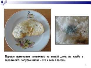 * Первые изменения появились на пятый день на хлебе в тарелке №3. Голубые пят