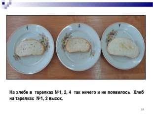 * На хлебе в тарелках №1, 2, 4 так ничего и не появилось. Хлеб на тарелках №1