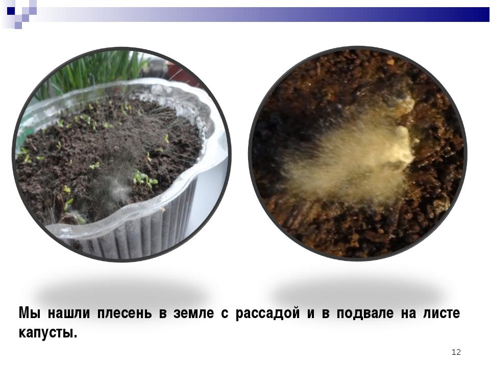 * Мы нашли плесень в земле с рассадой и в подвале на листе капусты.